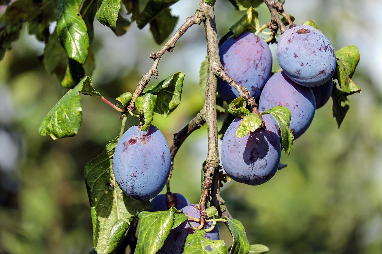The Ultimate Fruit Garden Guide