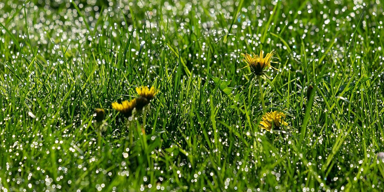 Weed Control: Types Of Weedkiller