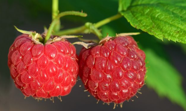The Truth About Raspberry Ketone?